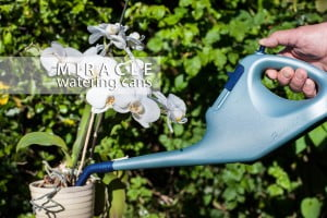 miracle-watering-cans-how-to-water-an-orchid